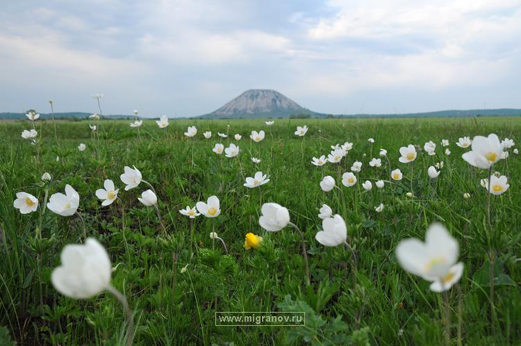 Фото луг цветов