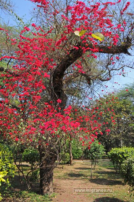 Цветы фикус фото и название занятие