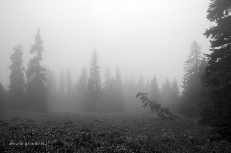фото леса в тумане
