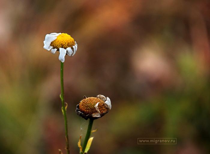 в корзину осенние цветы цветы ...: migranov.ru/photoalbum/fall/33.php