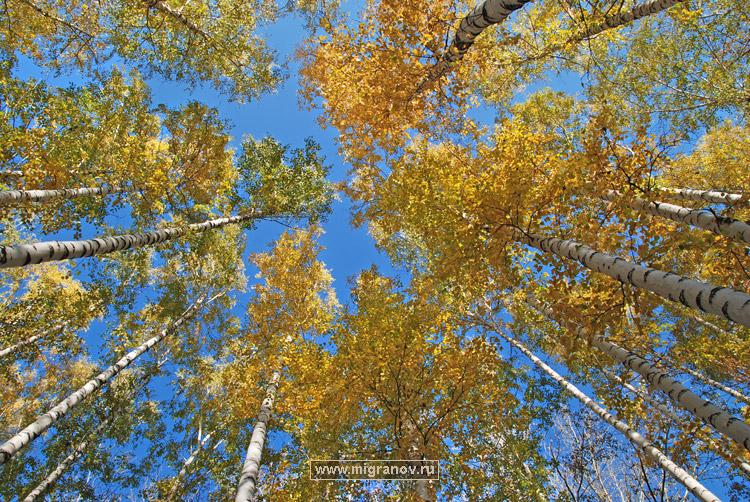 http://migranov.ru/photoalbum/fall/sky.jpg