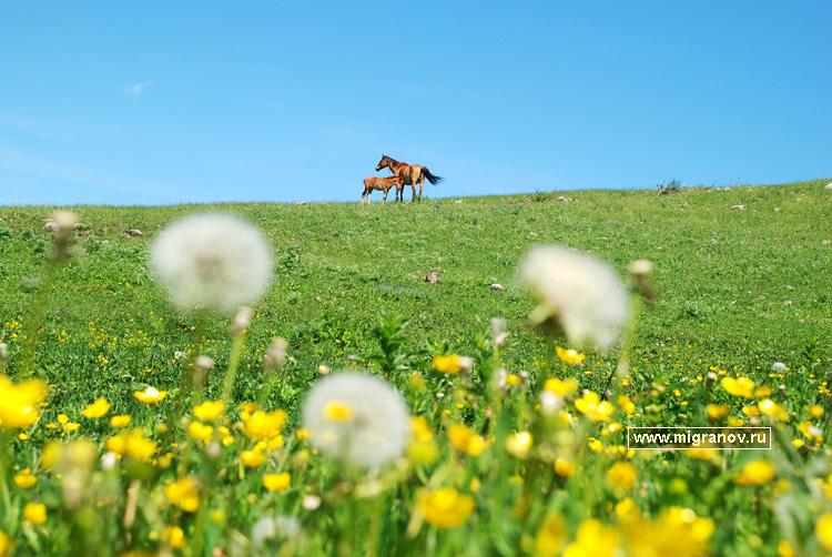 Лошади картинки 1k фото скачать обои