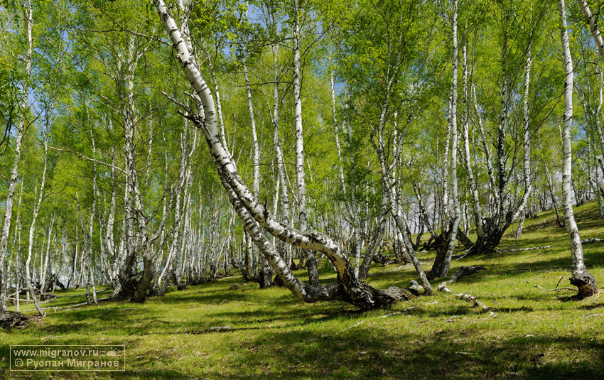 Осенний лес с водопадом  zastavoknet