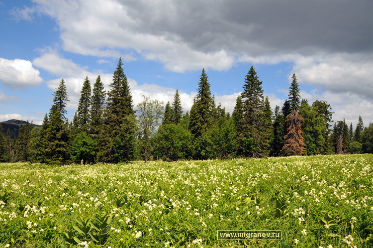 http://migranov.ru/photoalbum/summer/meadow.jpg